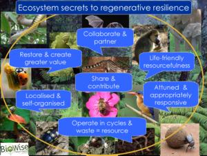 Regenerative resilience