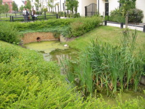 channel-with-water-and-plants