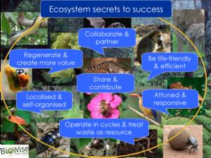 Ecosystem principles